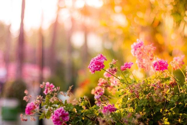 Welke producten heb je nodig om eenvoudig je tuin op te knappen?